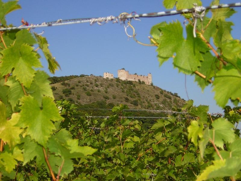 Vinohrady pod hradem