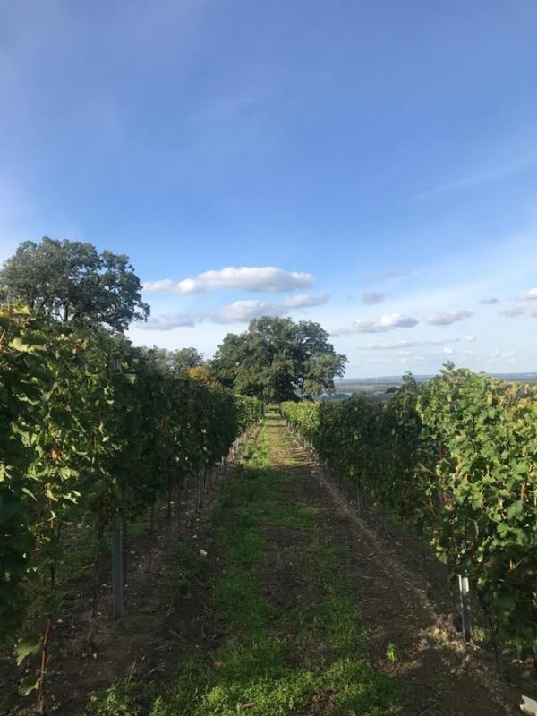 Romantická procházka mezi vinohrady