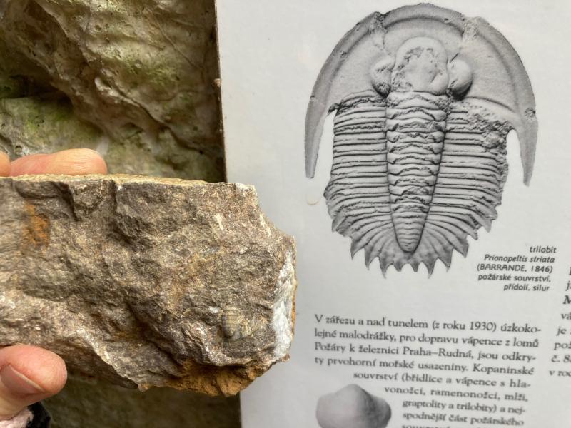 Nějaká malá zkamenělá příšera