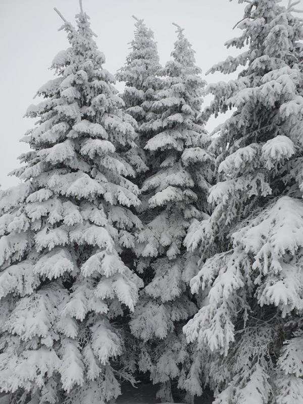 Sníh a mráz dokáží vytvořit úplná umělecká díla